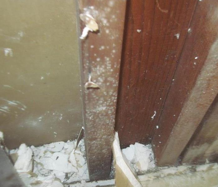 Mold Remediation Concerns with Mold