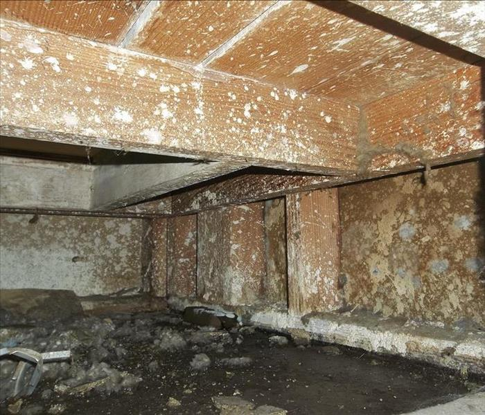 Mold Remediation Furniture Mold Removal