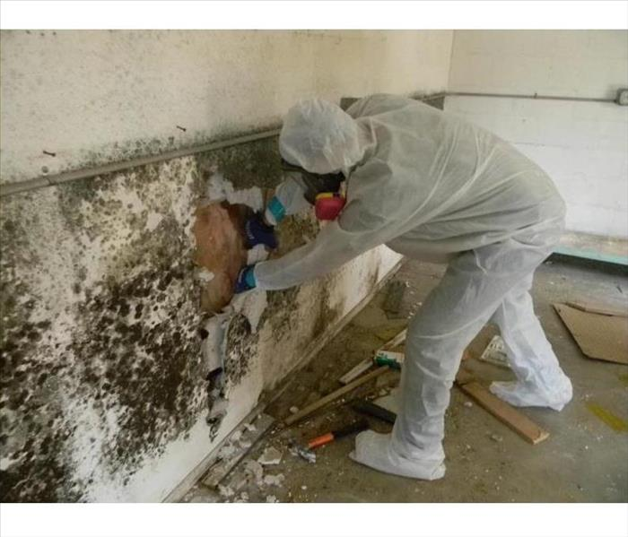 Mold Remediation 5 Myths About Mold