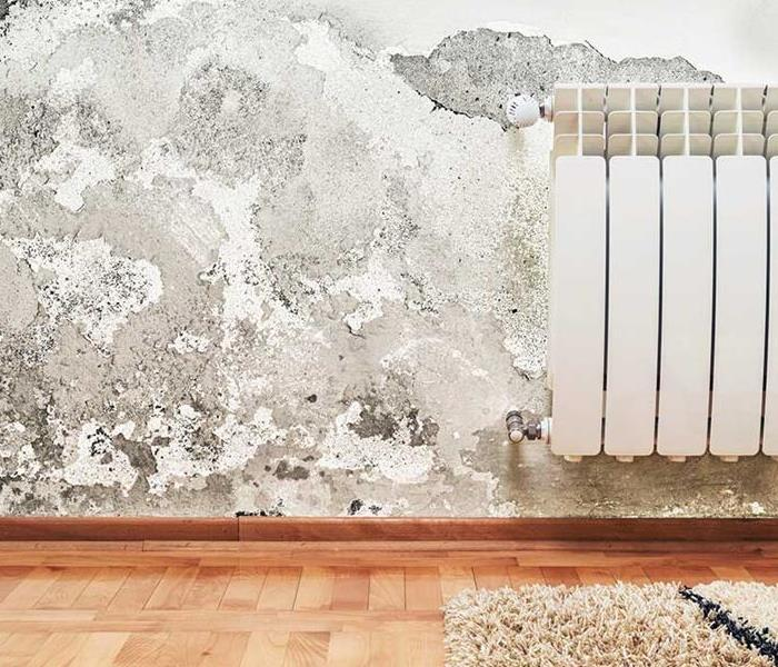 Mold Remediation 5 Things You Should Know About Mold this Summer